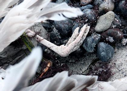 En död fågels fot på en strand