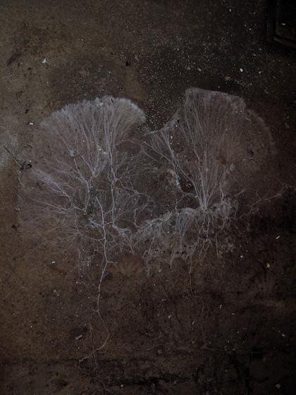 Ett par lungor utlagda på ett stengolv