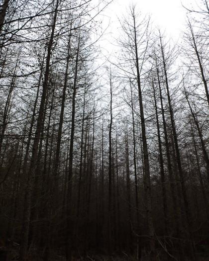 Döda träd som bildar en död skog