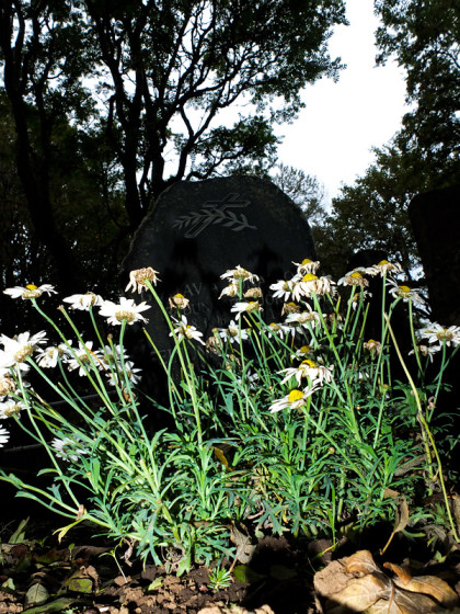Blommor framför en gravsten