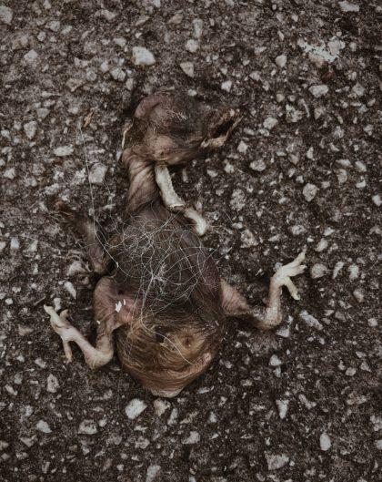 Död fågelunge